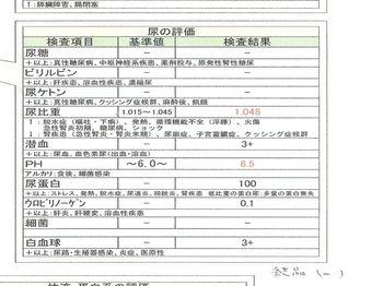 2009.4.9尿検査_R.jpg